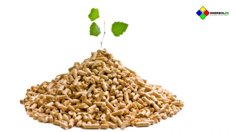 ¿Cómo funciona la energia biomasa? Usos, tipos y precio de biomasa ecologica